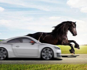 Car & horse