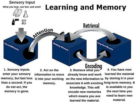 how to develop brain memory