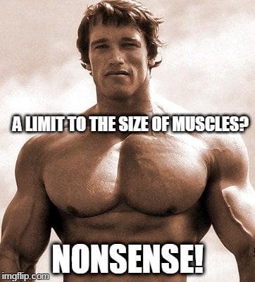Is There A Limit To The Size Of Our Muscles? » Science ABC