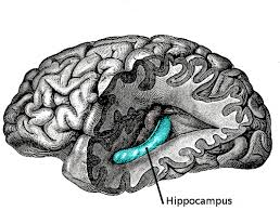 how the human brain stores and retrieves memories