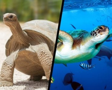 How Do Tortoises And Turtles Live For So Long?