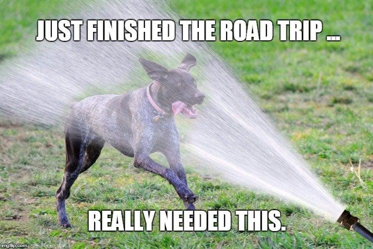 Dog drinking funny meme