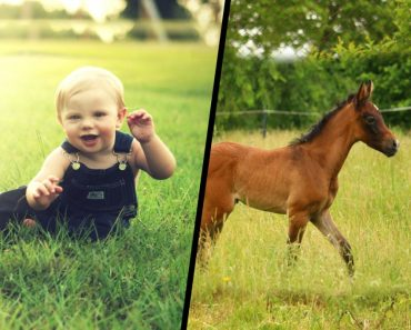 Human baby & Horse baby