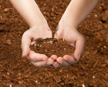 Soil in hands - Soil background