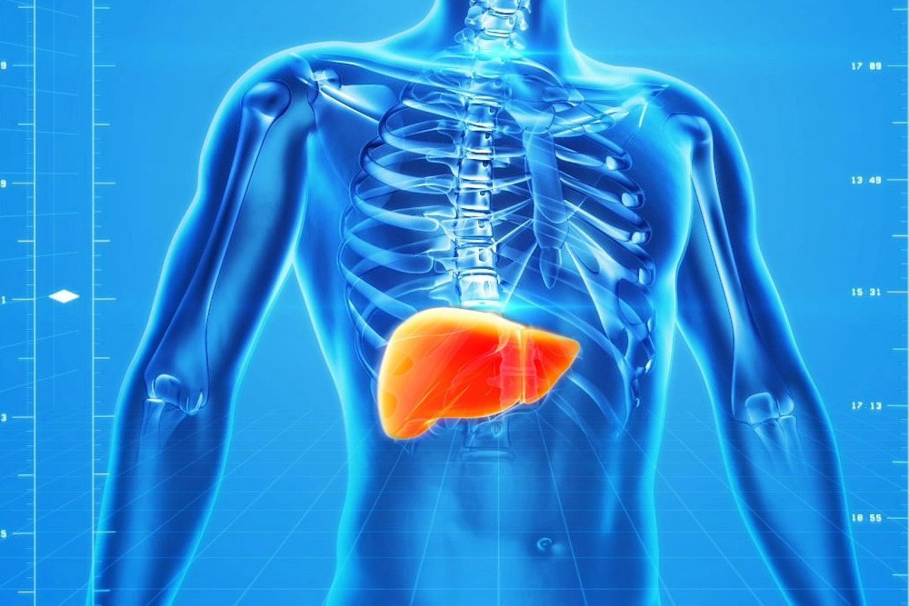 Can You Live Without A Liver? » Science ABC
