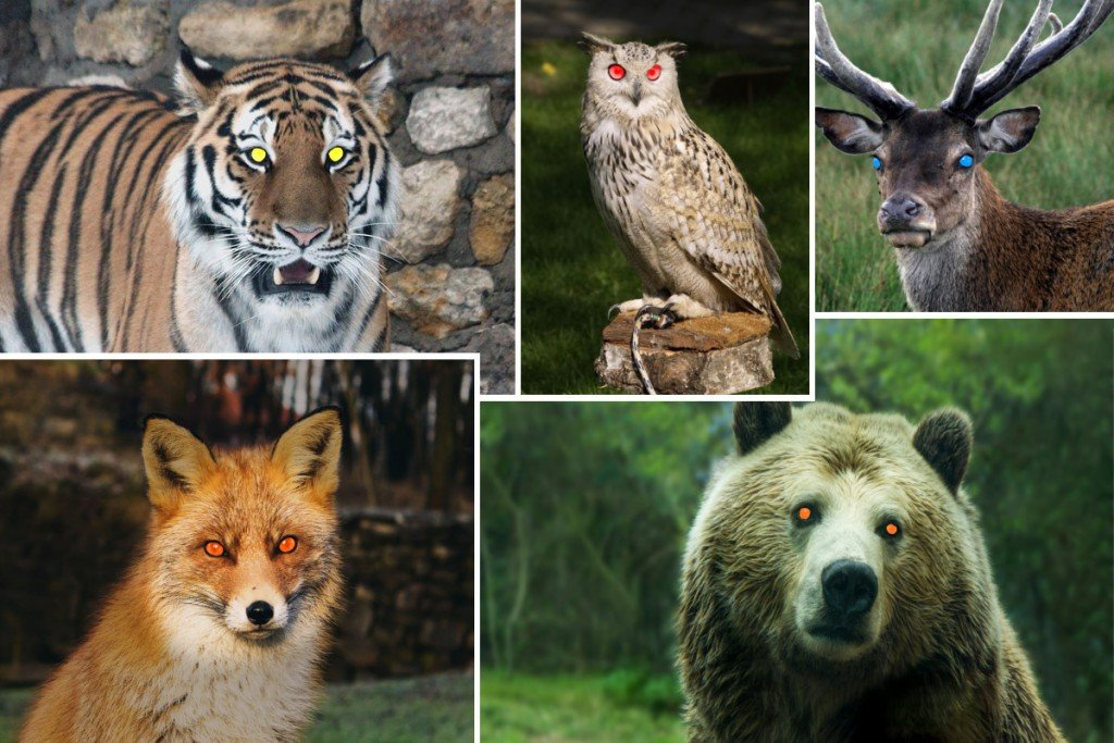 Animals eyeshine Deer tiger owl fox brown bear