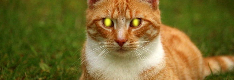 Cat eyeshine