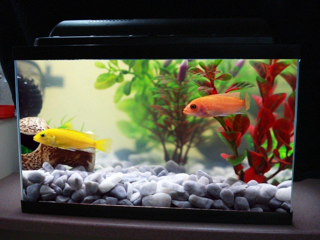 Freshwater fish hypertonic - Fish Tank