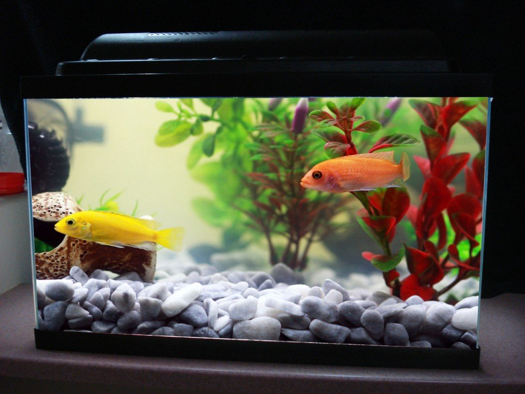 Freshwater fish acclimation - Fish Tank
