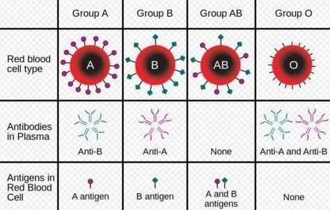 How Blood is differentiated