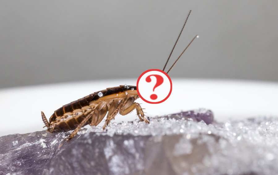 Image result for cockroach
