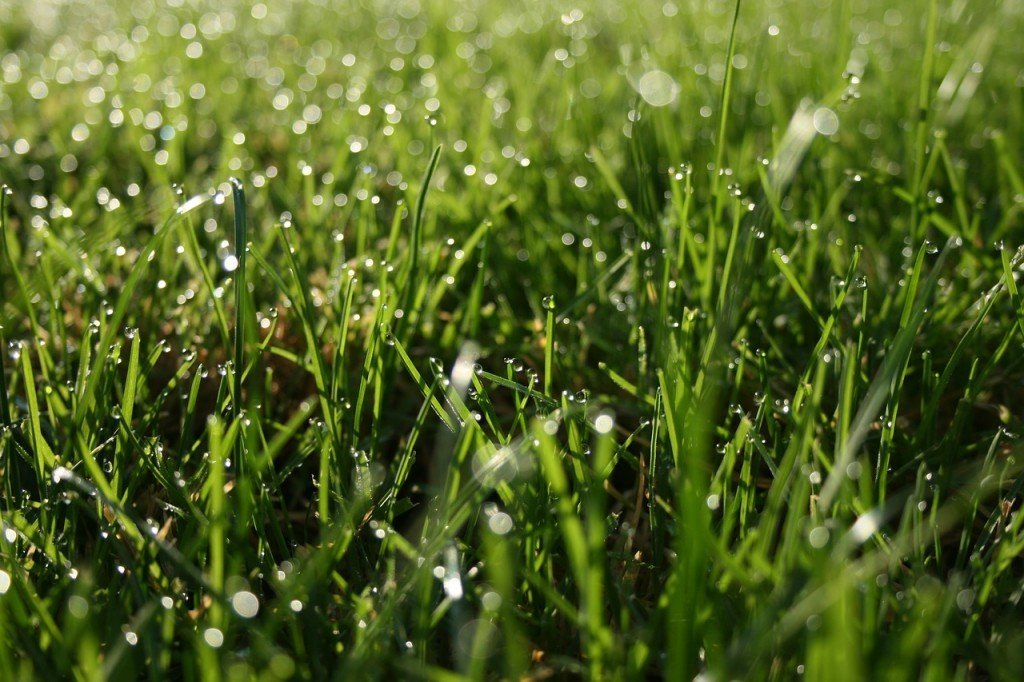 Water dropes on Green grass