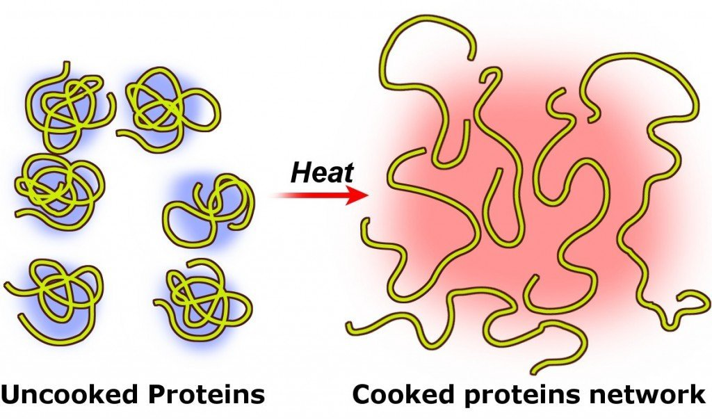 Protein coagulation denaturation