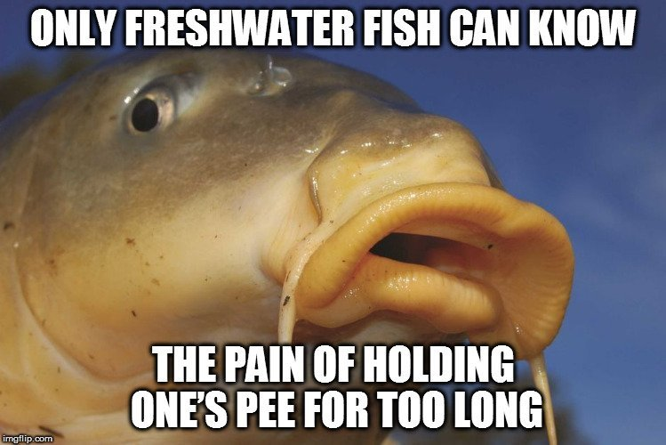 Why Can't Freshwater Fish Survive In Saltwater And Vice