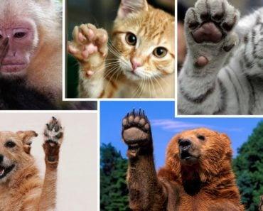 Do Animals Have Fingerprints?