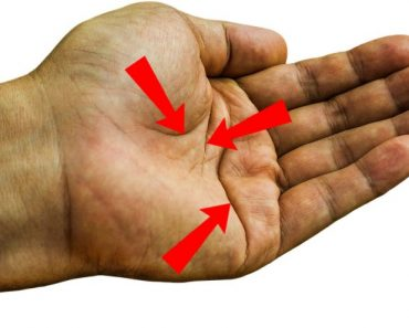 The creases on the palm help the skin to fold and stretch.