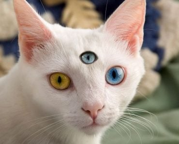 Can Animals Have A Third Eye?