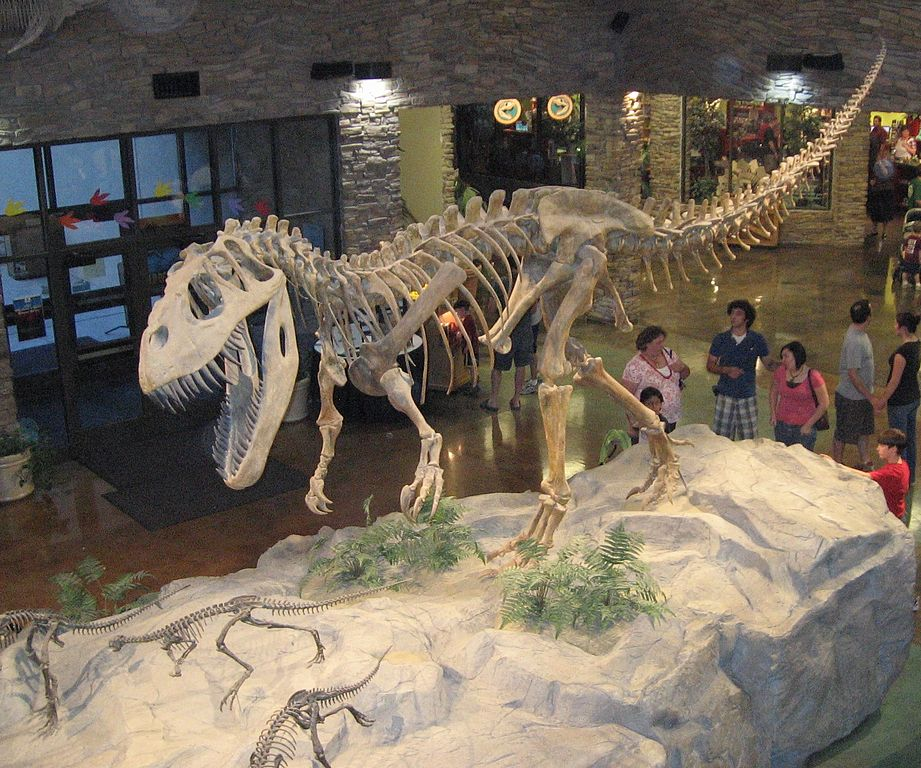 Why Don't We Find As Many Human Remains As Dinosaur Fossils?