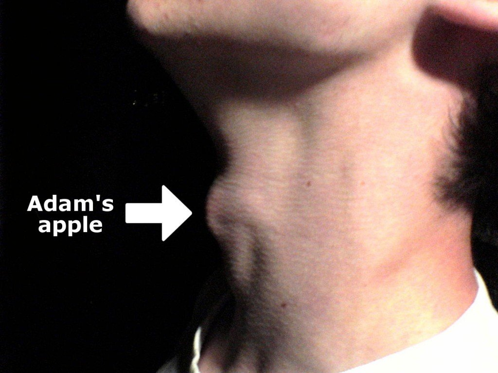 Myneck adams apple An example of male laryngeal prominence.