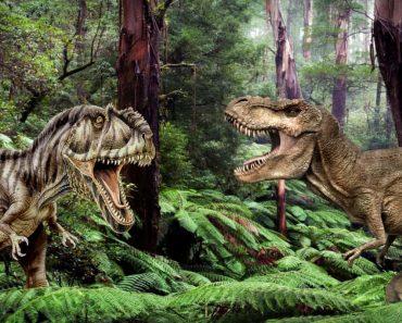 Giganotosaurus vs T Rex: Who Was The Deadliest Predator?