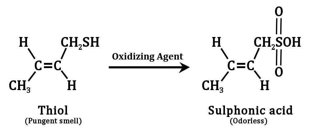 The action of an oxidising agent on thiols present in skunk spray