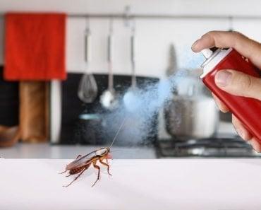 How Do Bug Sprays (Like Raid and Baygon) Kill Cockroaches?
