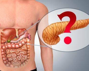 Pancreas in Human body