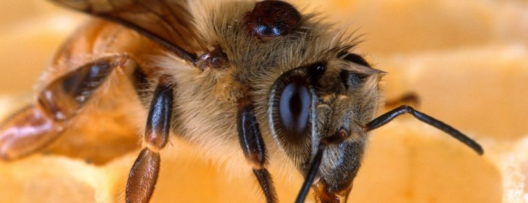 Bee close up bee knee