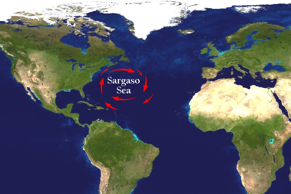 What Is The Sargo Sea? » Science ABC Sargo Sea Map on volcano map, mariana trench map, peninsula map, sailing map, massif map, sound map, channel map, ocean map, estuary map, coral reef map, seabed map, mediterranean map, caribbean map, gulf map, glacier map, bay map, south east asia map, world map, lagoon map, lake map,