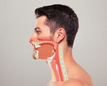 Food Pipe (Oesophagus) & Windpipe (Trachea) featured image
