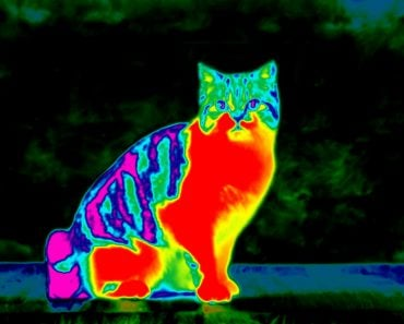 Infrared cat featured