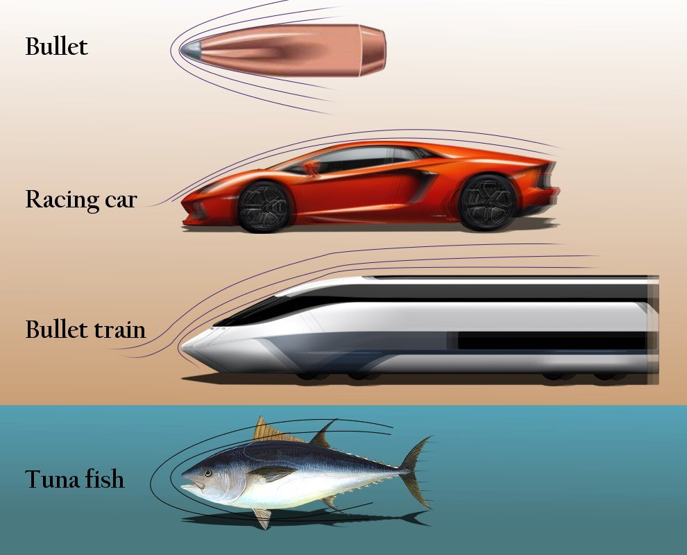 Streamlined objects bulet racing car bullet train tuna fish