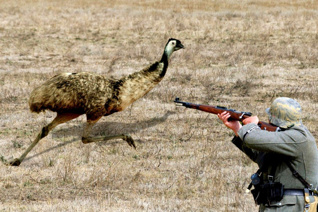 What Was The Emu War Of Australia And What Was The Outcome Science Abc