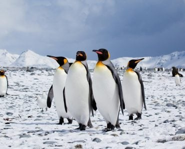 Penguins on iceland