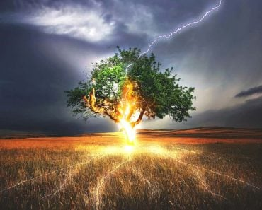 Lightning strick on tree
