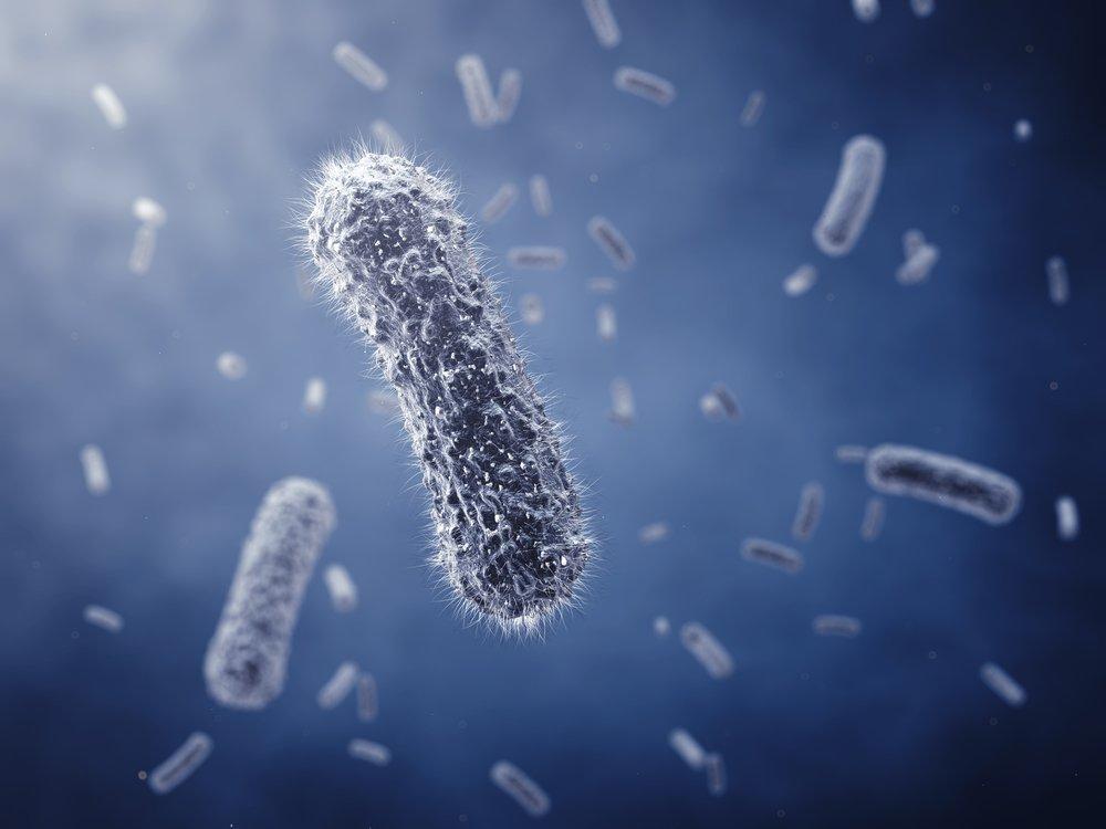 Rod-shaped bacteria ,detailed illustration