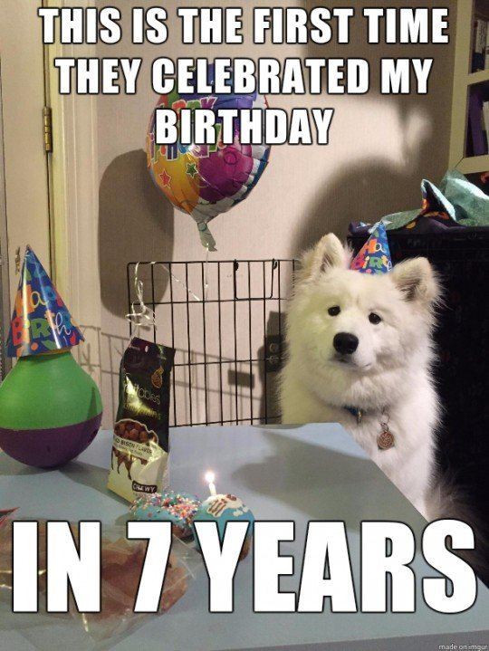 Dogs Become Sexually Mature Just After The First Time They Wear Their Birthday Hat Whereas Humans Dont Reach Maturity Until Age Of 13 Or 14
