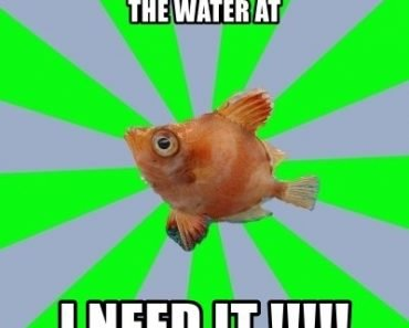Where is the dissolved oxygen in the water at i need it meme