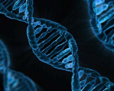 DNA replication.
