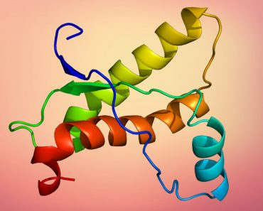 Structure of the PRNP protein prions