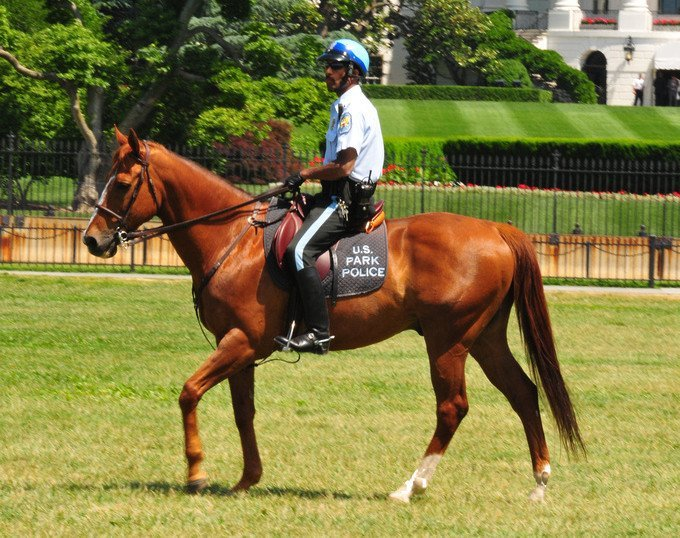 US mounted cop