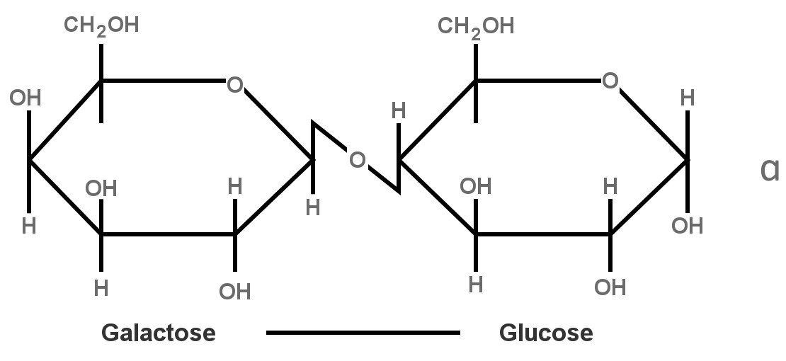 structure of lactose