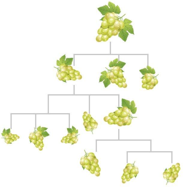Descendant grapes