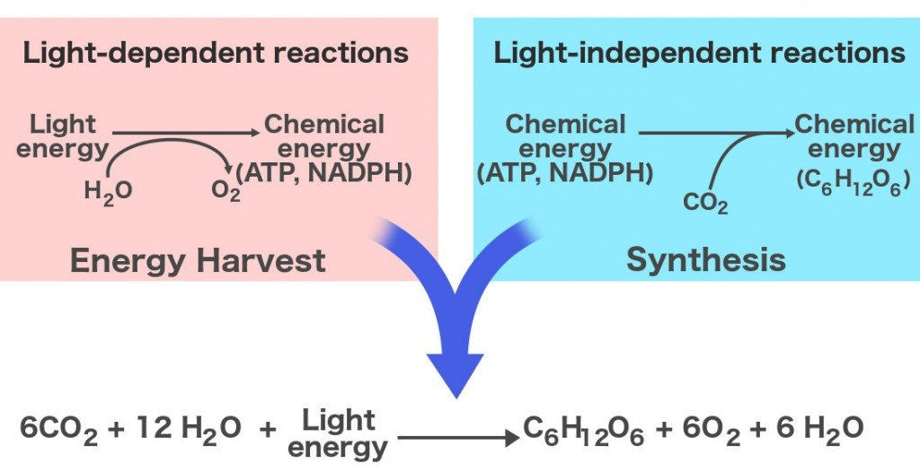 Energy harvest synthesis formulas