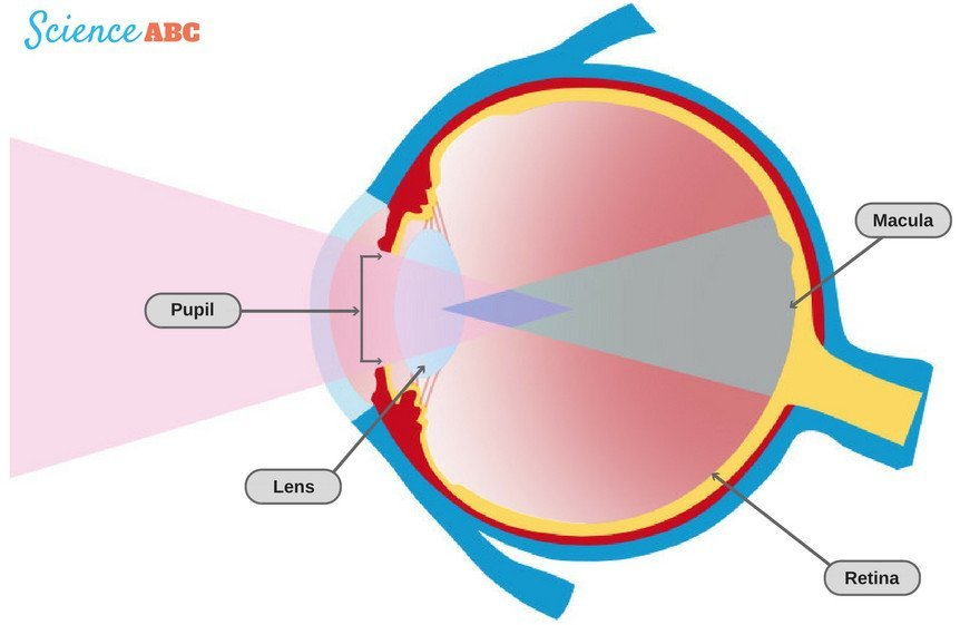 How Can Looking At The Sun Can Hurt Your Eyes Science Abc
