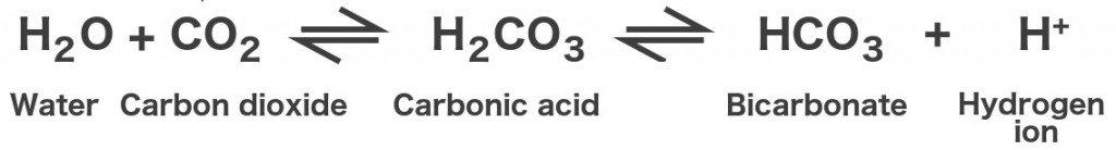 Water carbon dioxide carbonic acid bicarbonate hydrogen ion formula