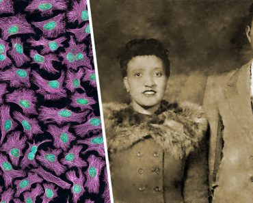 HeLa-III and henrietta lacks and david lacks
