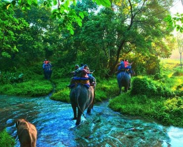 Life On Earth jungle safari elephant people water river green