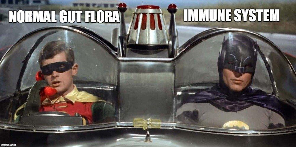 Normal gut flora immune system meme