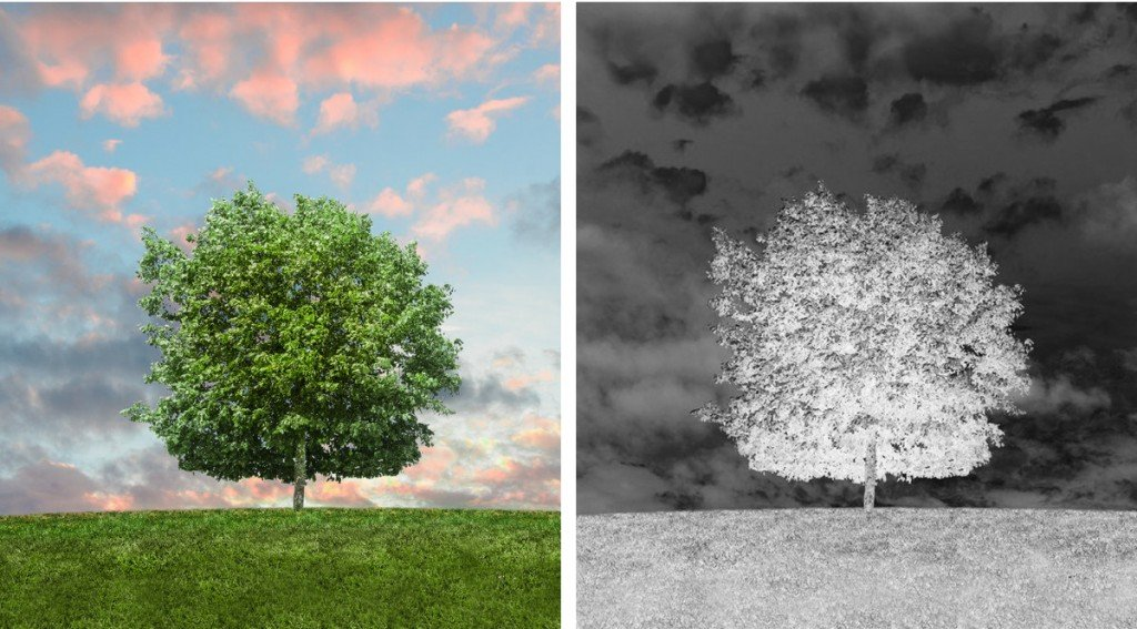 Tree in sunlight & tree in negative